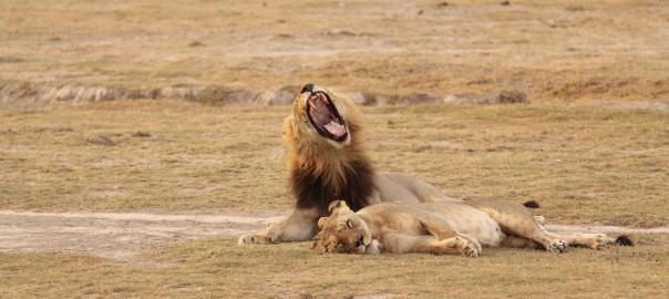 Lua de Mel – Quênia – Amboseli