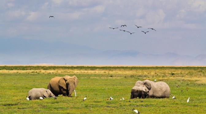 Lua de Mel – Quênia – Amboseli – Mais Fotos